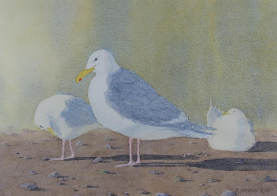 Gulls Early Morning light